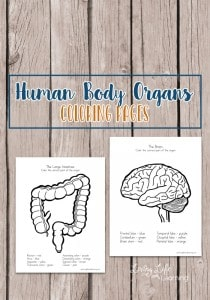 Human-body-organs-coloring-pages