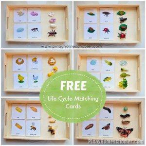 Life-Cycle-Cards_thumb1