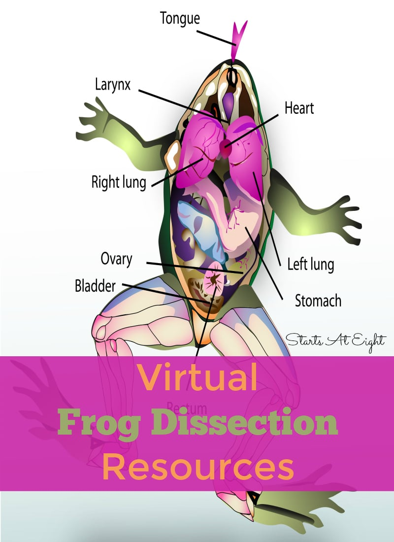virtual frog dissection resources with free printable