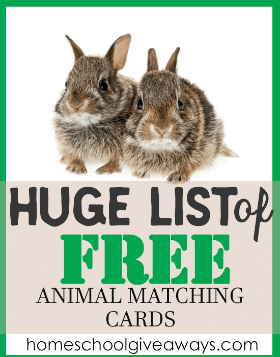 animal matching cards
