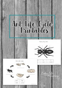 ant-life-cycle-worksheets