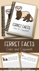 Ferret-Facts-Color-and-Copywork-for-all-ages
