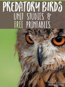 Predatory Birds Unit Studies and FREE Printables