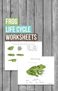 frog-life-cycle-worksheets