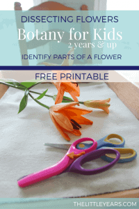 Dissecting-FlowersBotany-for-KidsIdentify-Parts-of-a-flower-683x1024