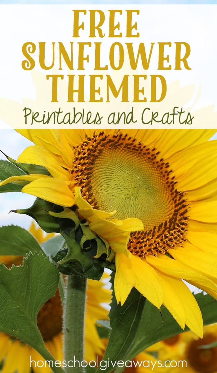 image regarding Printable Sunflower titled Cost-free Sunflower Themed Printables and Crafts - Homeschool