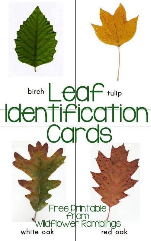 leafid