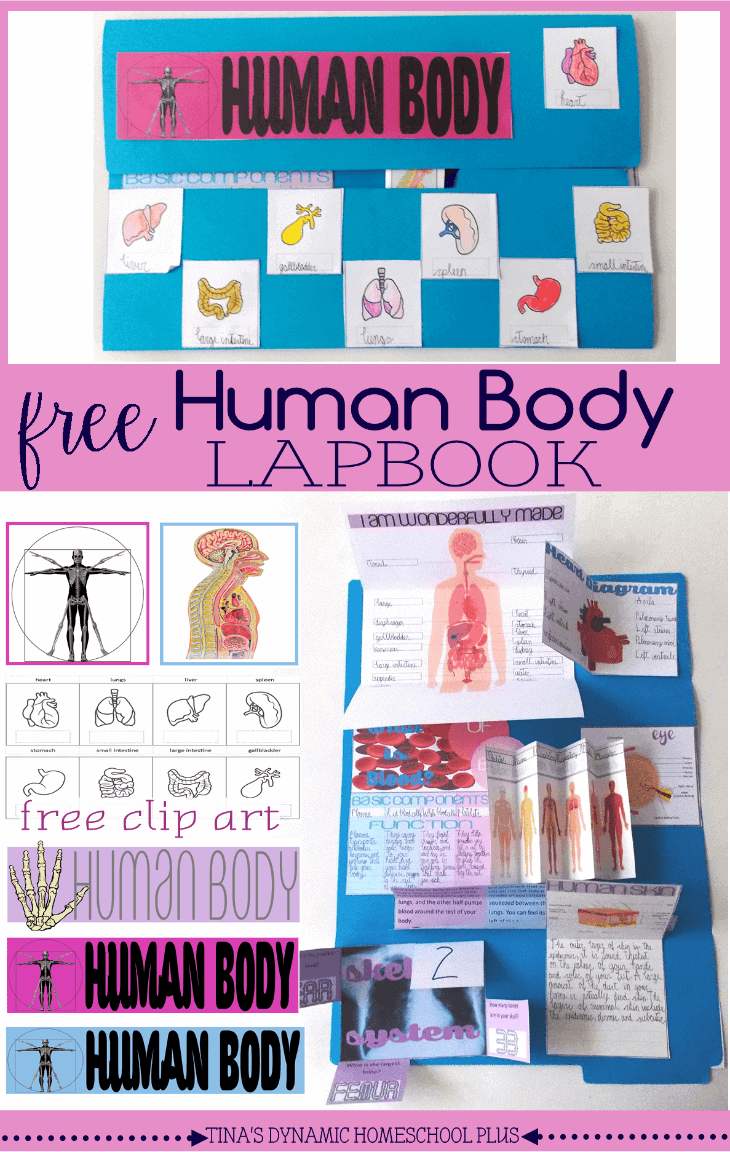 Free-Human-Body-Lapbook-and-Unit-Study-@-Tinas-Dynamic-Homeschool-Plus