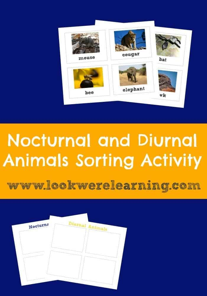Nocturnal-and-Diurnal-Animals-Sorting-Activity