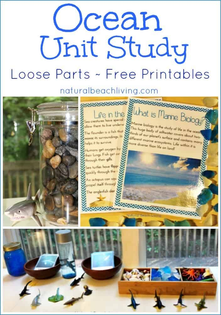 ocean-unit-study