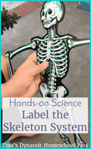 Hands-on-Science.-Label-the-skeleton-system-activity-at-Tinas-Dynamic-Homeschool-Plus