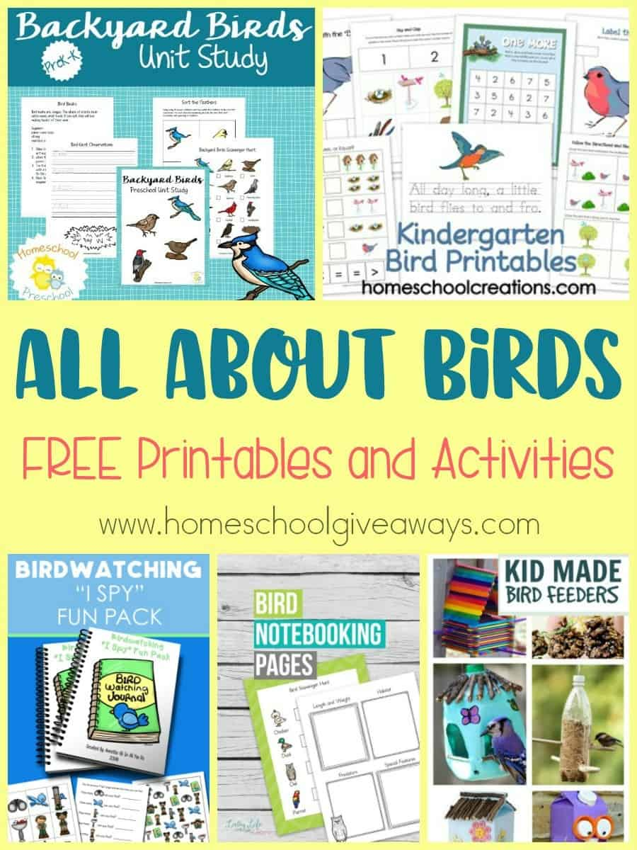 All About Birds: FREE Printables And Activities