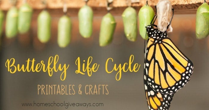 Butterfly Life Cycle_FB