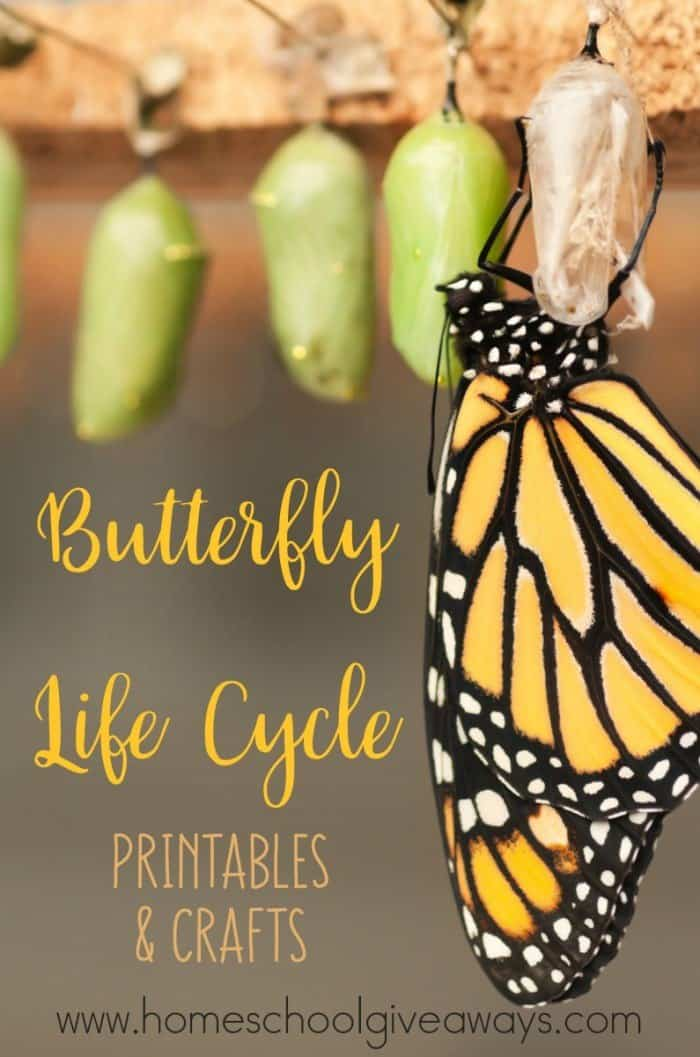 Butterfly Life Cycle_pin