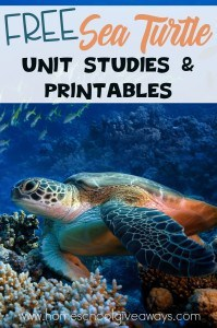 Sea Turtles_pin