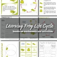 frog-life-cycle-small