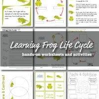 frog-life-cycle-small