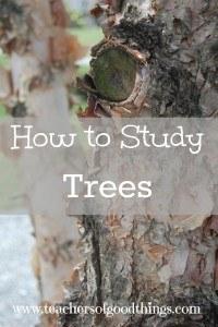 studytreeslead
