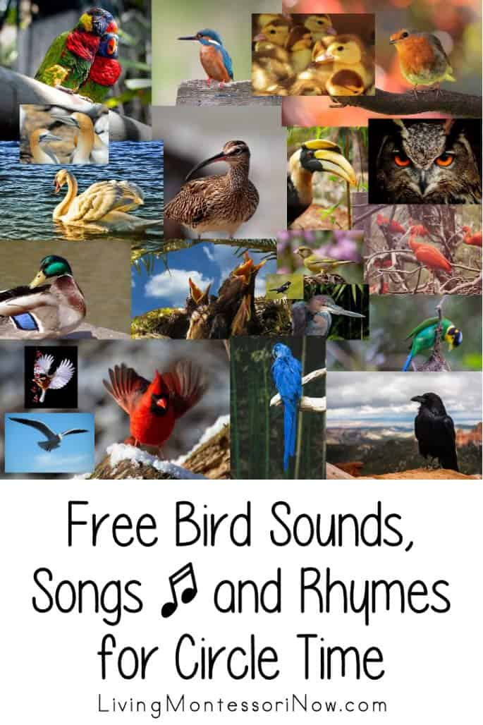 Free-Bird-Sounds-Songs-and-Rhymes-for-Circle-Time