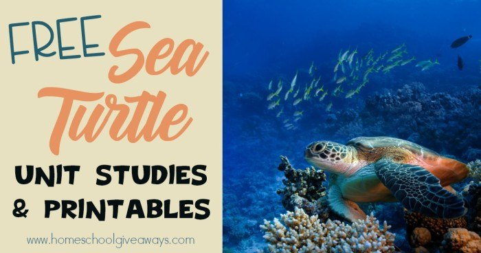 Sea Turtles_FB