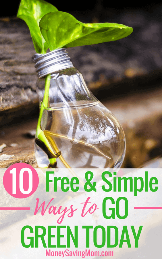 10-Free-Simple-Ways-to-Go-Green-Today-564x902