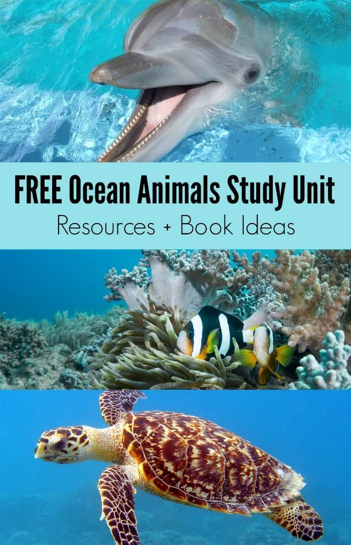 FREE-Ocean-Animals-Study-Unit-Homeschool-and-Classroom-Resources-Book-Ideas