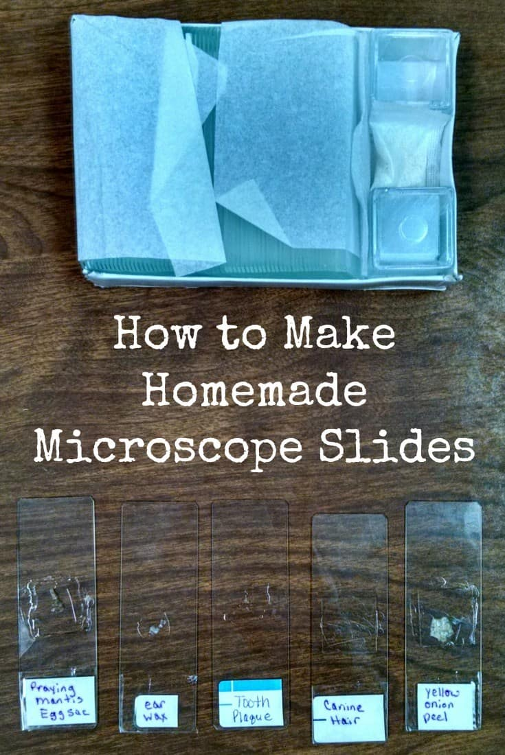 How-to-Make-Homemade-Microscope-Slide