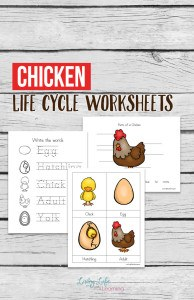 chicken-life-cycle-worksheets-for-kids