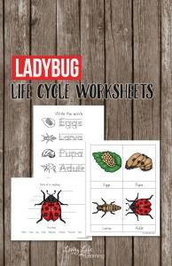 ladybug-life-cycle-worksheets