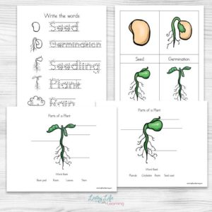plant-life-cycle-worksheets-2