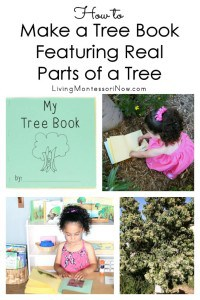 How-to-Make-a-Tree-Book-Featuring-Real-Parts-of-a-Tree
