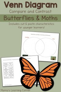 Butterflies-and-Moths-Venn-Diagram-650x975