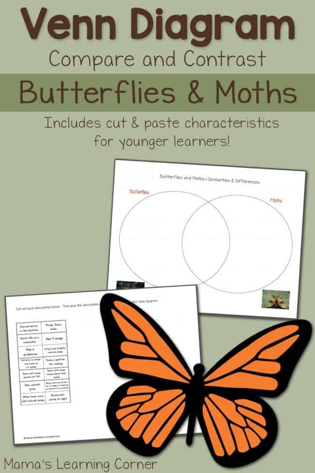 Butterflies-and-Moths-Venn-Diagram-650x975