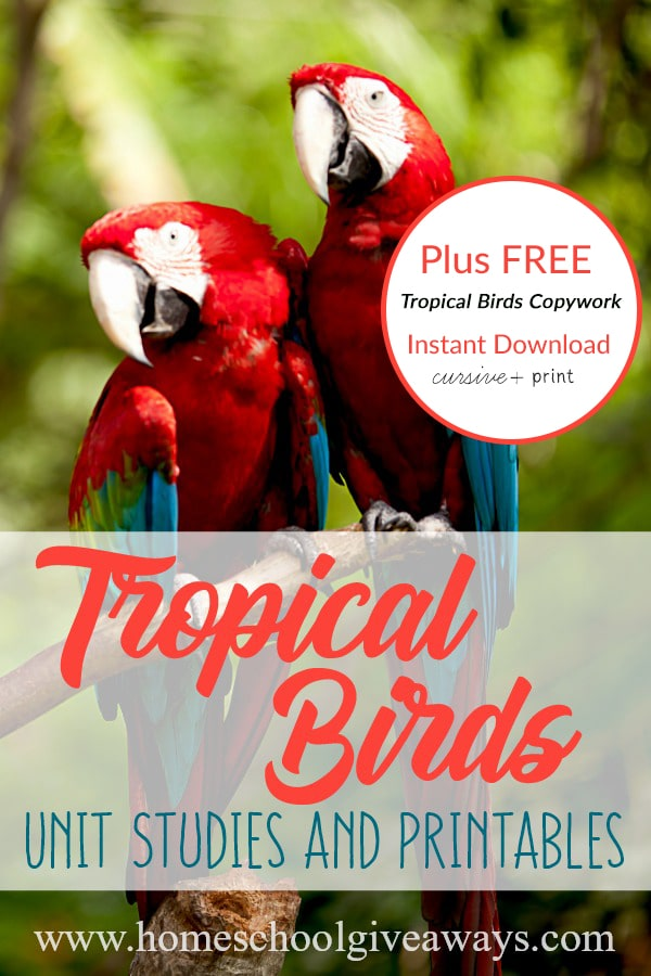 Tropical-Birds_pin