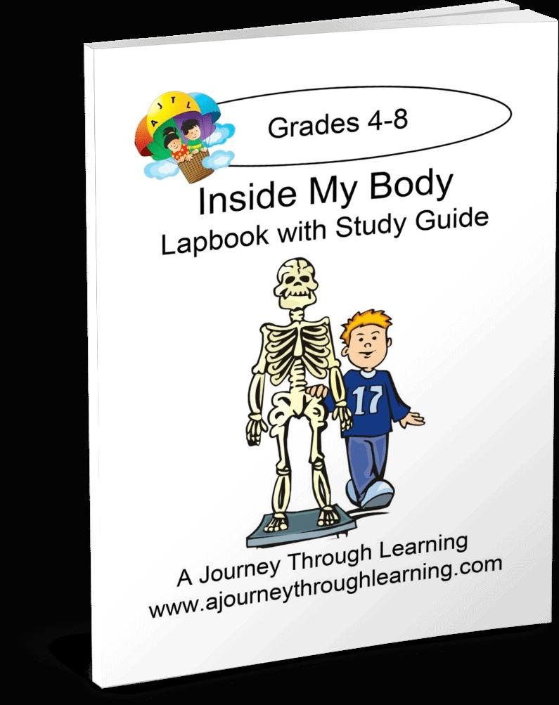 inside-body
