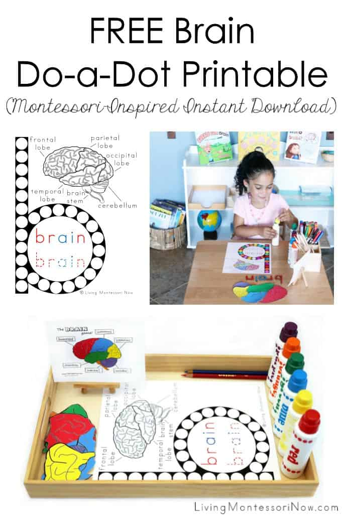 FREE-Brain-Do-a-Dot-Printable-Montessori-Inspired-Instant-Download