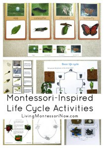 Montessori-Inspired-Life-Cycle-Activiites
