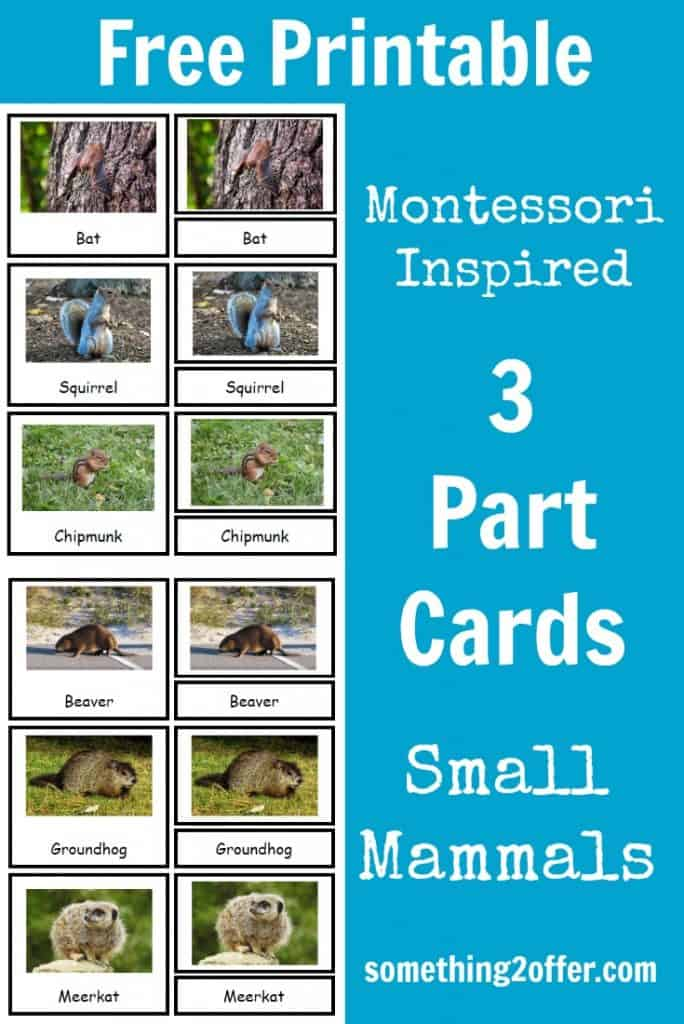 Small-Mammals-3-part-cards-free-printable-684x1024