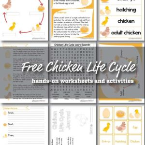 chicken-life-cycle-worksheets