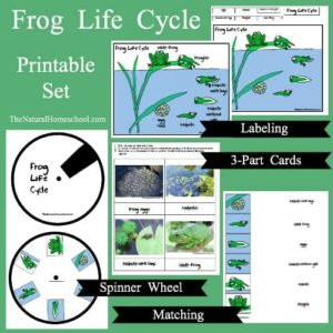 frog-life-cycle-pin