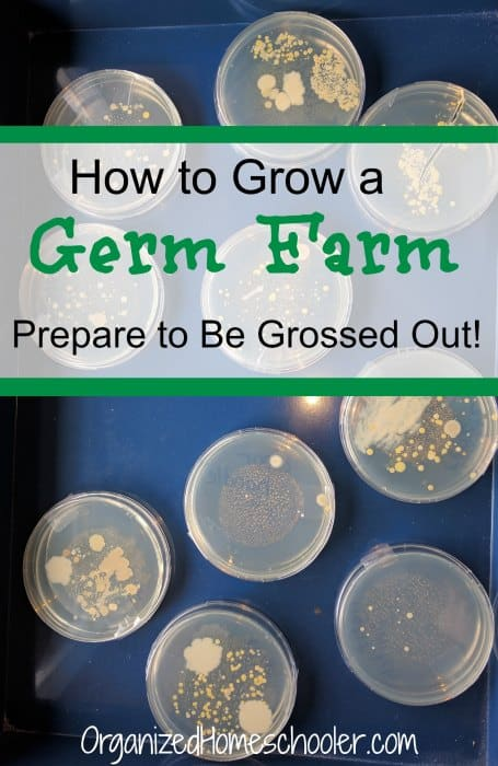 how-to-grow-a-germ-farm-1