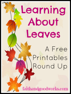 learningaboutleaves