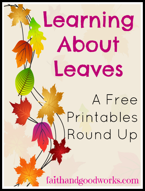 learningaboutleaves