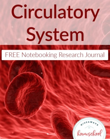 diseases-circulatory-system-notebook