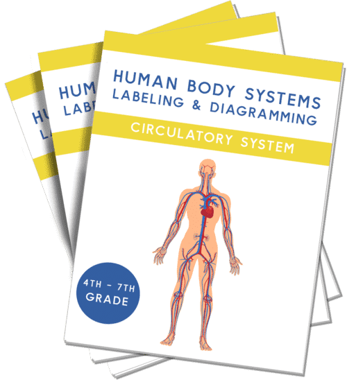 Free Circulatory Systems Worksheets With Instant Download