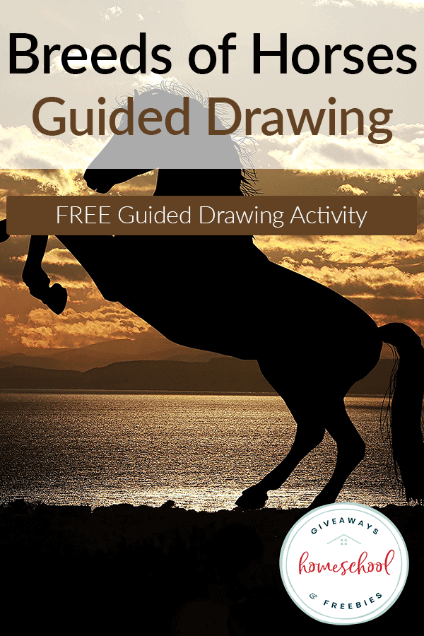 Guided-Drawing-Breeds-of-Horses