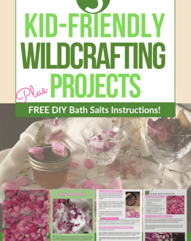 5 Kid-Friendly Wildcrafting Projects