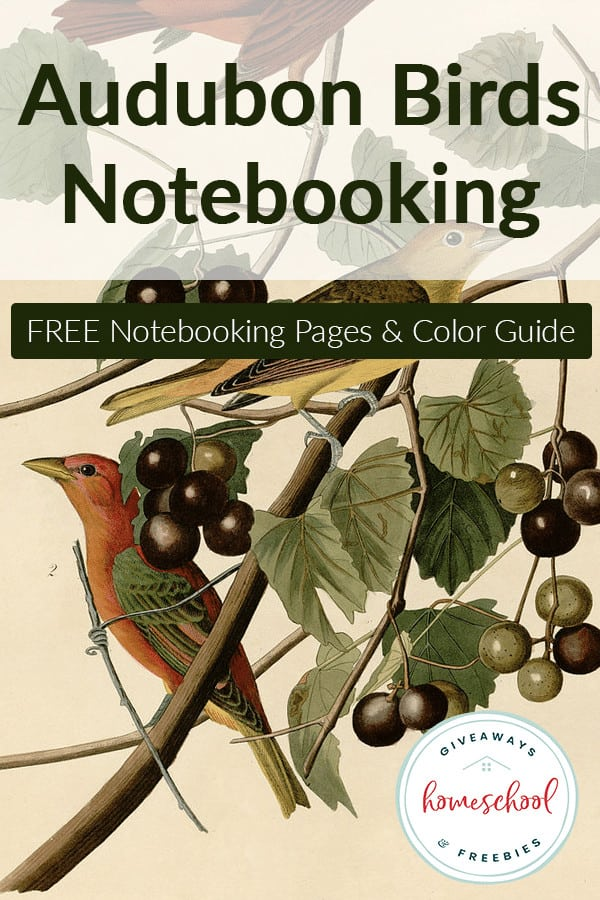 drawing of birds in tree branch with overlay - Audubon Birds Notebooking FREE Guide