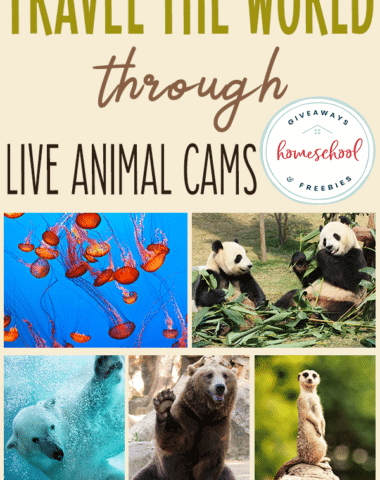 "Have you and your kids ever watched LIVE animal cams? They are so fascinating! My kids will sit and watch them for hours. It is a great way to watch some unique animals and ""travel"" the world without ever leaving your home. #animalcams #animalwebcams #science #hsgiveaways"