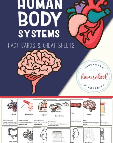Human Body Systems Fact Cards.